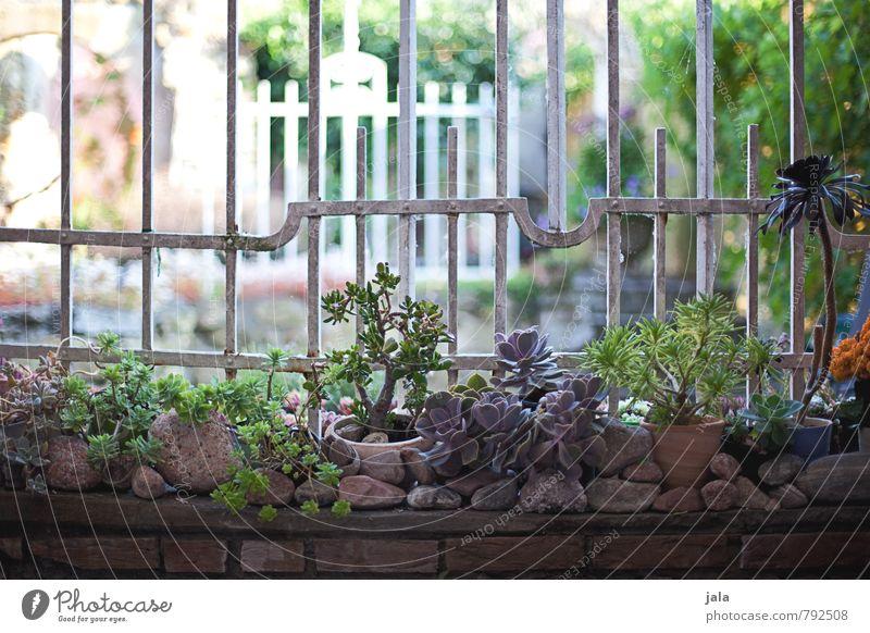 sukkulenten Pflanze Wand Mauer Stein Garten ästhetisch Geländer Zaun Grünpflanze Topfpflanze Sukkulenten
