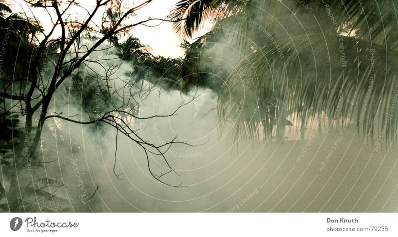 chikungunya Himmel Wald Landschaft Nebel Afrika Urwald Gas Nebelschleier Giftgas Mauritius
