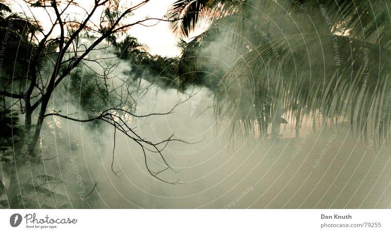 chikungunya Mauritius Giftgas Nebel Wald Nebelschleier Afrika Urwald Gas Abend Himmel Landschaft
