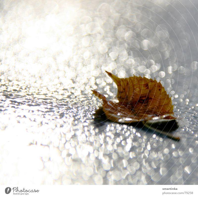 Glamuoröses Tod erfrieren Herbst Blatt feucht Verfall Wassertropfen Trauer Licht Einsamkeit gelb verfallen Verzweiflung Ende Seil Reflexion & Spiegelung