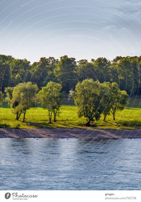 *600* | Bäume am Rheinufer Umwelt Natur Landschaft Pflanze Erde Sand Wasser Himmel Sommer Klima Wetter Schönes Wetter Baum Gras blau braun grün Wiese Laubbaum