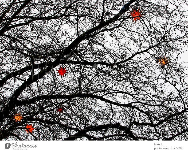 Weihnachtsbaum Baum Winter mehrfarbig Weihnachten & Advent Stern (Symbol) Ast Lampe herrnhuter sterne astwerk