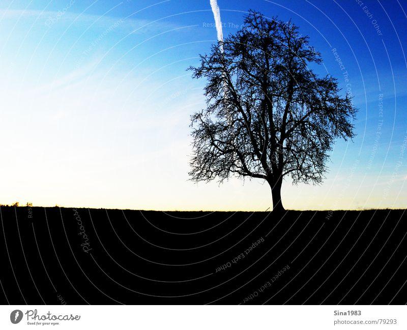 Abendstimmung im Winter Baum Wiese dunkel Feld Gras mehrfarbig Kondensstreifen ruhig Denken genießen Baumstamm Erholung Licht Sonnenuntergang Herbst trist