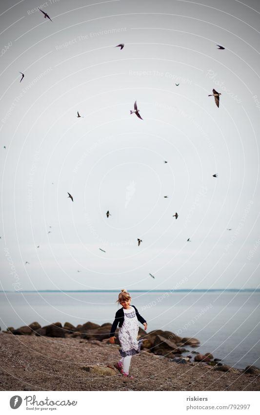 das mädchen mit den schwalben Mensch Himmel Kind Natur Wasser Sommer Erholung Landschaft Mädchen Tier Umwelt Leben feminin Küste außergewöhnlich gehen