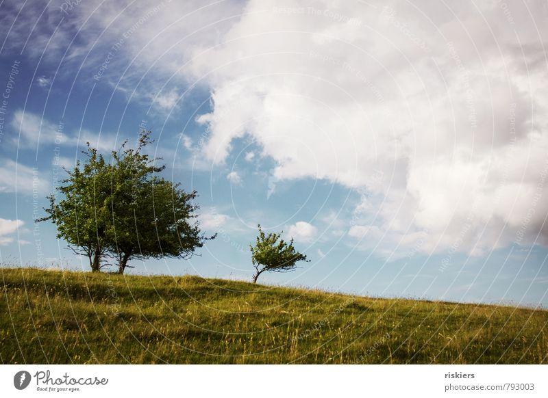 two trees and the little one Himmel Natur blau grün Pflanze Sommer Baum Landschaft Wolken Umwelt Wiese natürlich Horizont Kraft Idylle wild