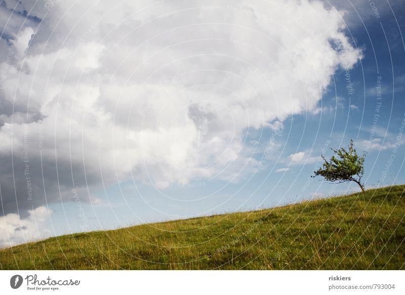 the little one quite large Umwelt Natur Landschaft Pflanze Himmel Wolken Sonne Sommer Schönes Wetter Wind Baum Wiese Hügel frech frei frisch klein saftig blau