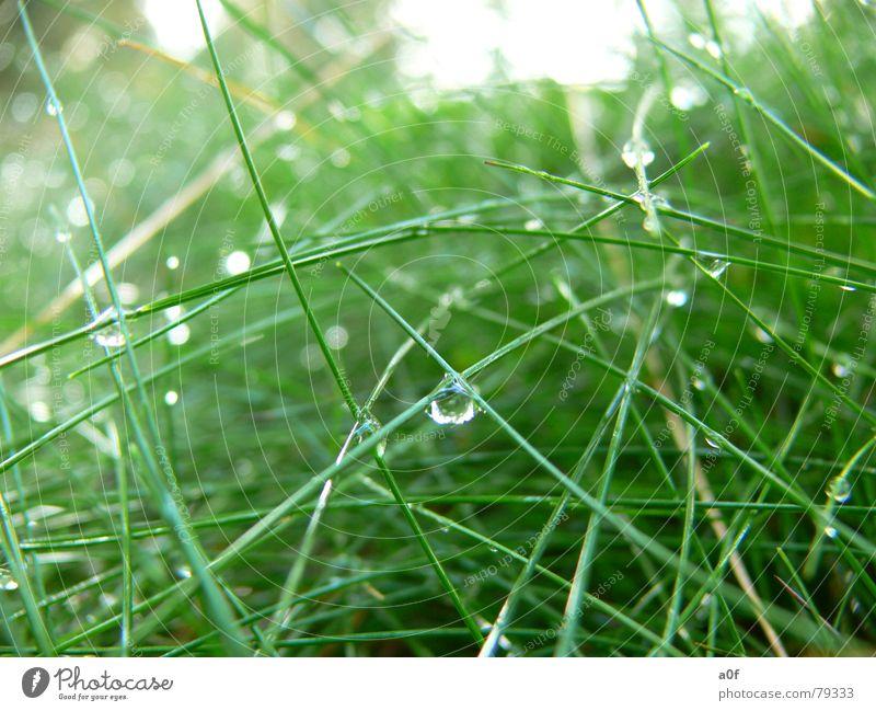 Bionic Natur grün Pflanze Wassertropfen Technik & Technologie Bionik