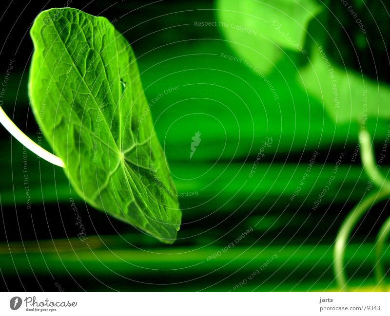 Grün mit Grün grün Pflanze Wiese Gras Kräuter & Gewürze Kletterpflanzen Pflanzenteile