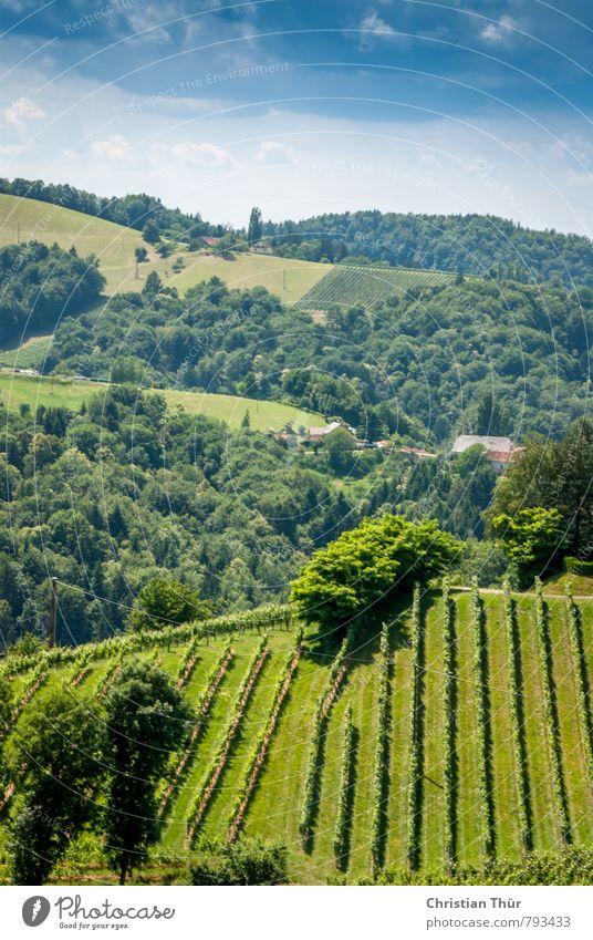 Südsteiermark / Gamlitz Umwelt Natur Wolken Sommer Schönes Wetter Pflanze Gras Wein Park beobachten wandern ästhetisch blau braun grün weiß Gefühle Stimmung