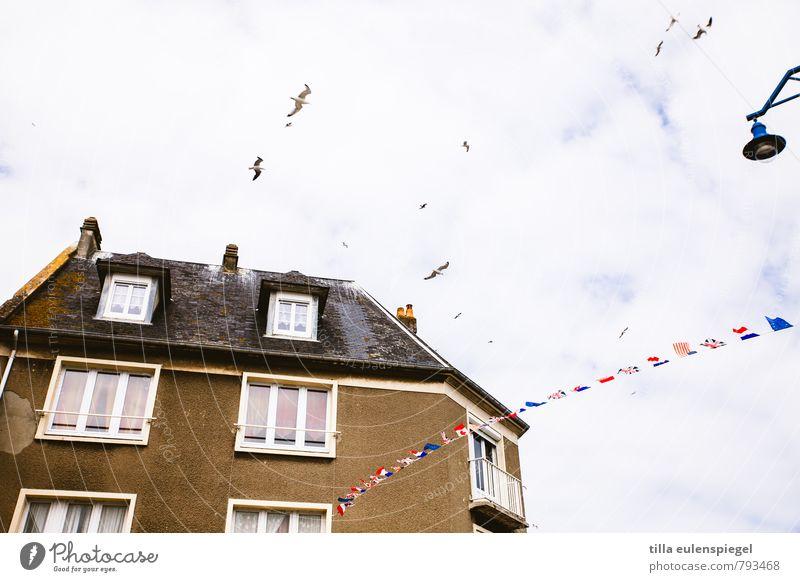 flatterhaft Wohnung Haus Hafenstadt Gebäude Fassade Fenster Dach fliegen hoch braun Erholung Stimmung Stadt Möwe Vogel Lampe Straßenbeleuchtung Fahne flattern