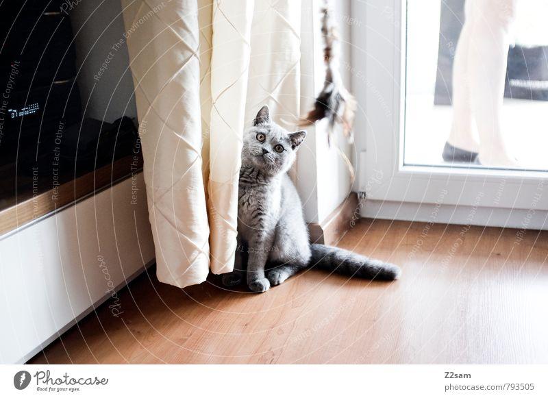 Was´n? Katze Frau schön Haus Tier Leben Stil grau hell Beine Wohnung Häusliches Leben elegant sitzen stehen ästhetisch