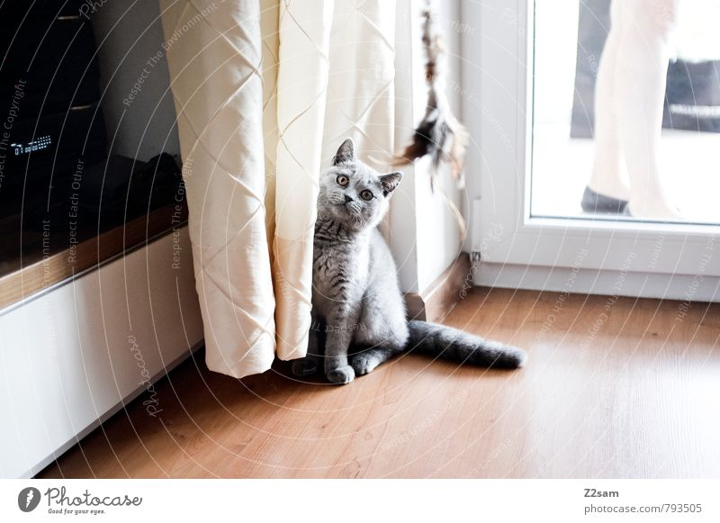 Was´n? Stil Häusliches Leben Wohnung Haus Tier Haustier Katze beobachten hocken Blick sitzen ästhetisch elegant hell schön Neugier niedlich Sauberkeit grau rein