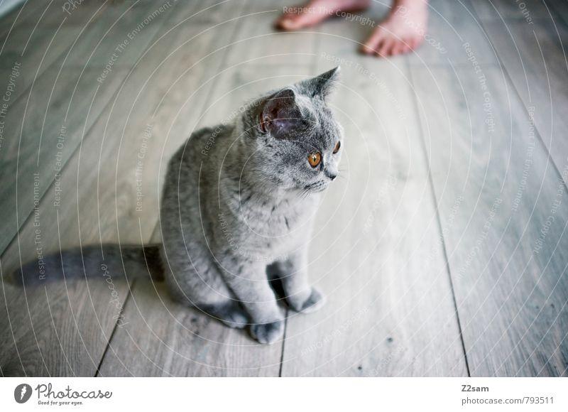 Mietz Mietz! Haustier Katze beobachten Erholung Blick sitzen ästhetisch elegant frech schön kalt kuschlig Neugier niedlich Sauberkeit grau Wachsamkeit Vorsicht