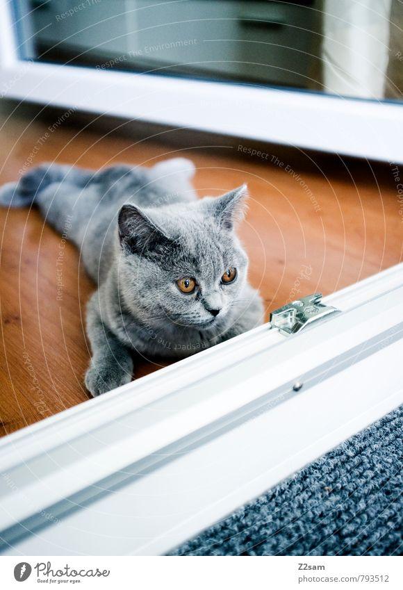 Abflacken Katze schön Erholung ruhig Haus Tier kalt Tierjunges grau klein braun liegen Wohnung Lifestyle Häusliches Leben elegant