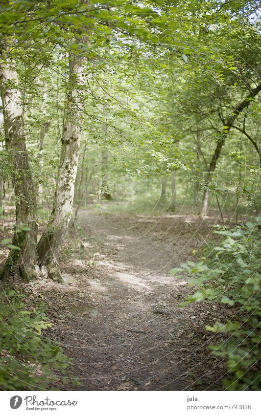 waldweg Natur schön Pflanze Sommer Baum Landschaft Wald Umwelt natürlich wild Sträucher frisch ästhetisch Freundlichkeit Grünpflanze Wildpflanze
