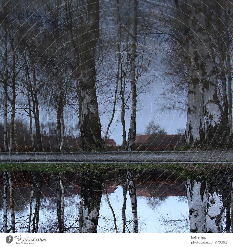 himmel über berlin Birke Birkenwald Pfütze Reflexion & Spiegelung Blatt Holzmehl Panorama (Aussicht) wald herbst autm Wasser kallejipp groß