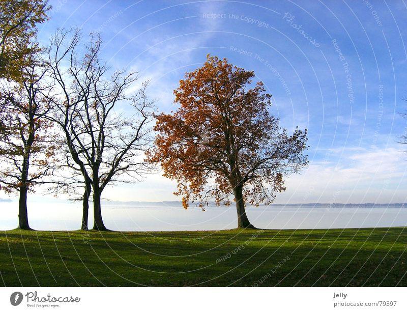 herbstspaziergang Sonne Natur Pflanze Wasser Himmel Herbst Baum Gras Blatt Wiese blau grün Chiemsee Grünfläche Farbfoto Außenaufnahme Menschenleer Tag