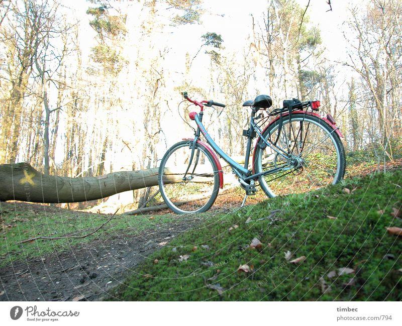 Wo bleibt er denn? Fahrrad Wald Baumstamm grün Wiese fahren Mobilität unterwegs Sträucher Blatt Holz Überbelichtung dunkel warten Sitzgelegenheit Fahrradlenker