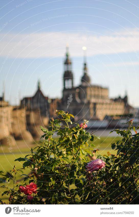 Elbromantik Himmel Ferien & Urlaub & Reisen Stadt Pflanze schön Wasser Sommer Blume Blüte Architektur elegant Sträucher Tourismus Schönes Wetter Kirche Brücke