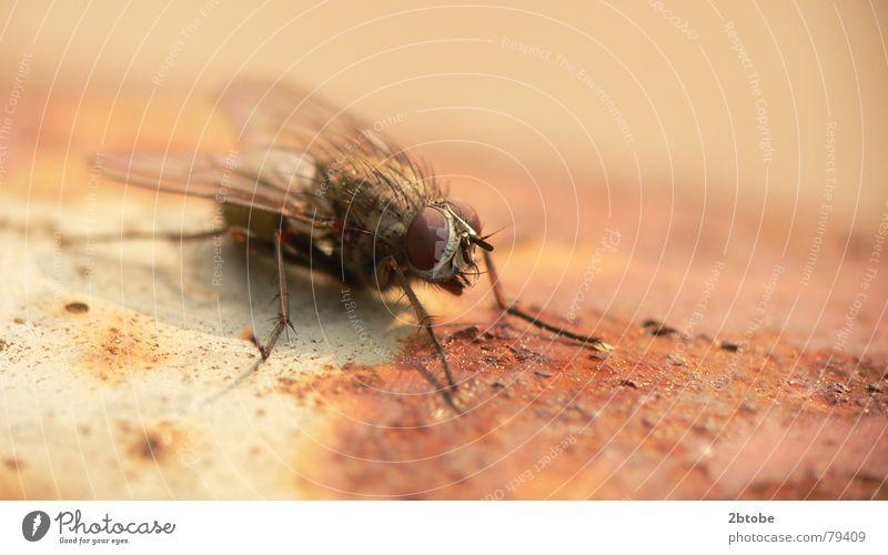 rusty Natur alt rot Sommer schwarz Auge Tier Metall hell braun dreckig Fliege fliegen Flügel Insekt verfallen