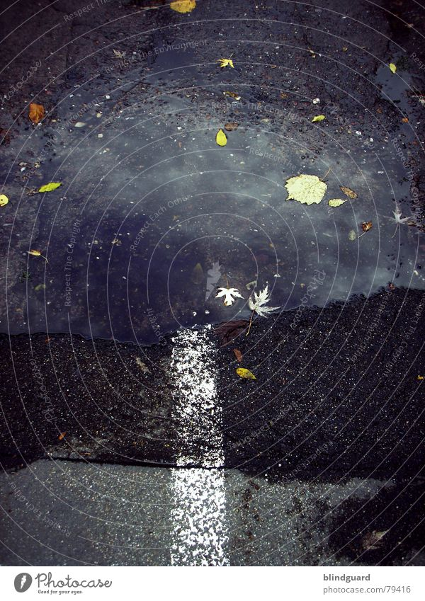 Road To Nowhere Pfütze Herbst Blatt Linie Asphalt Reflexion & Spiegelung trist grau schwarz Verkehr nirgendwo Straße Wasser Farbe Wege & Pfade