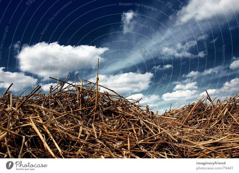 close to home Natur Himmel Sommer Wolken Gras Landschaft Feld Getreide Länder Ernte Korn Stroh