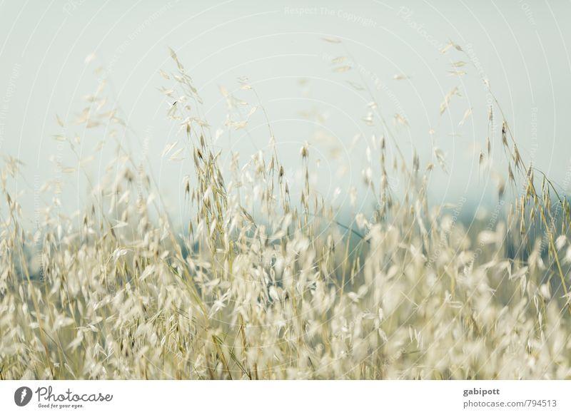 !Trash! | darauf ein Korn Natur blau Pflanze Sommer Sonne Gras Feld gold Ausflug Getreide Getreidefeld Gerstenfeld
