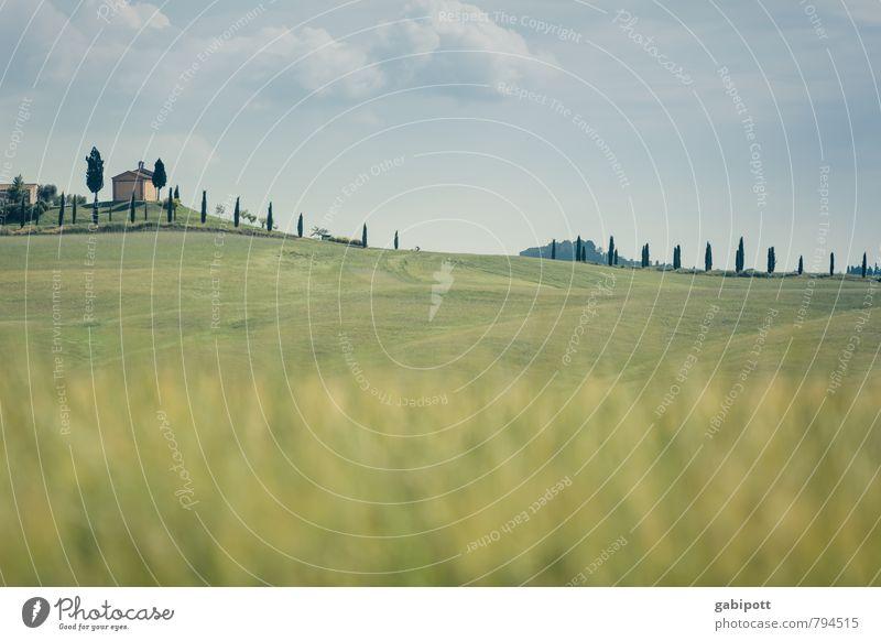 Strich in der Landschaft Ferien & Urlaub & Reisen Umwelt Natur Luft Himmel Horizont Sonne Sommer Schönes Wetter Baum Zypresse Wiese Feld Hügel Toskana Italien