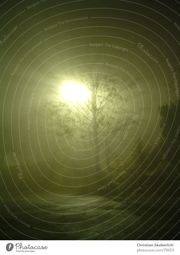 Sonne in der Nacht Nebellampe Baum Herbst Neonlicht Baumstamm dunkel Nebelschleier Licht Schleier sonnenlos kalt veredeln schwarz Leuchtstoffröhre