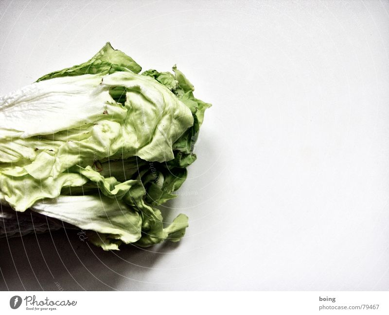 Lass mich dein Butterbrot sein Blüte Küche Gemüse Markt falsch Blattsalat Vitamin Bioprodukte Salat Biologische Landwirtschaft verdorben welk biologisch Vegetarische Ernährung Kohl Kopfsalat