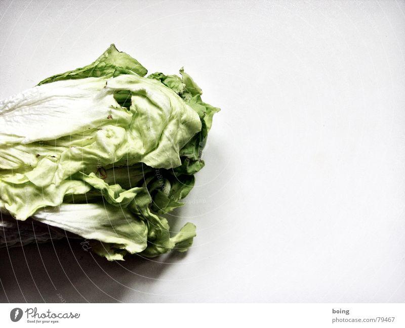Lass mich dein Butterbrot sein Kopfsalat Chinakohl Rohkost verdorben Biotechnologie falsch Kohl welk Vitamin Vegetarische Ernährung Blüte Bioprodukte