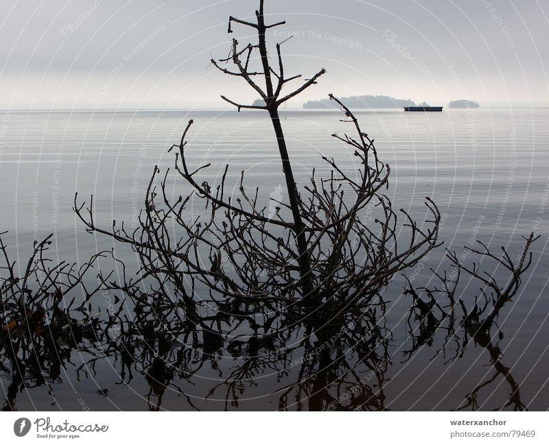 Treibgut Natur Wasser Himmel Strand Blatt Wolken Herbst Tod grau See Stimmung Küste Nebel Horizont trist Insel
