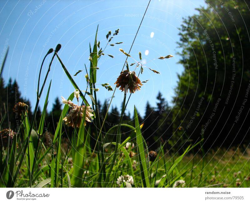 grünes gras Himmel grün Sommer Erholung Gras
