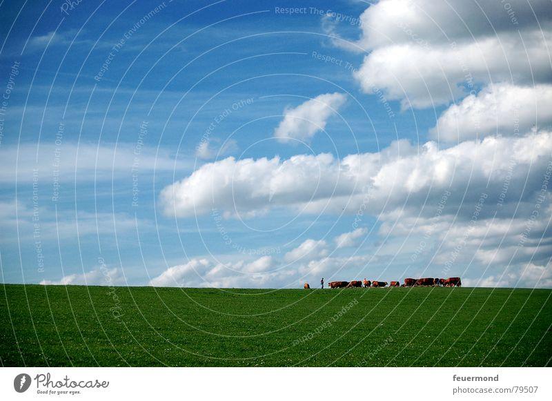 Alle zum melken... Himmel grün Sonne Sommer Wolken Tier Wiese Gras Horizont Weide Landwirtschaft Bauernhof Kuh Haustier Stall