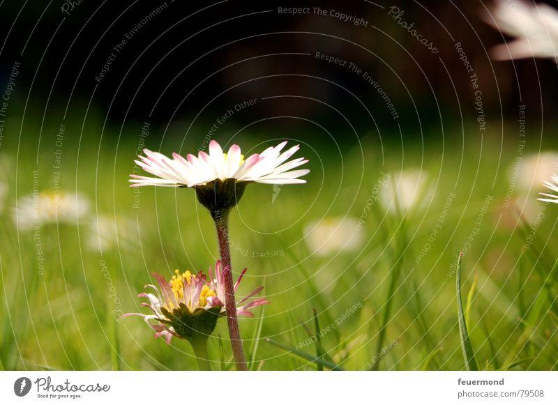 Jahresrückblick: Mai 2006 Natur grün Pflanze Sommer Blume Freude Wiese Gras Frühling Garten Blüte Feld Rasen Blumenstrauß Lebensfreude Gänseblümchen