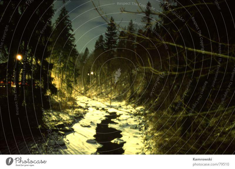 Ursprung der Weichsel Fluß Wisla Tanne Licht Europa weichsel Polen Schnee Fluss Abend