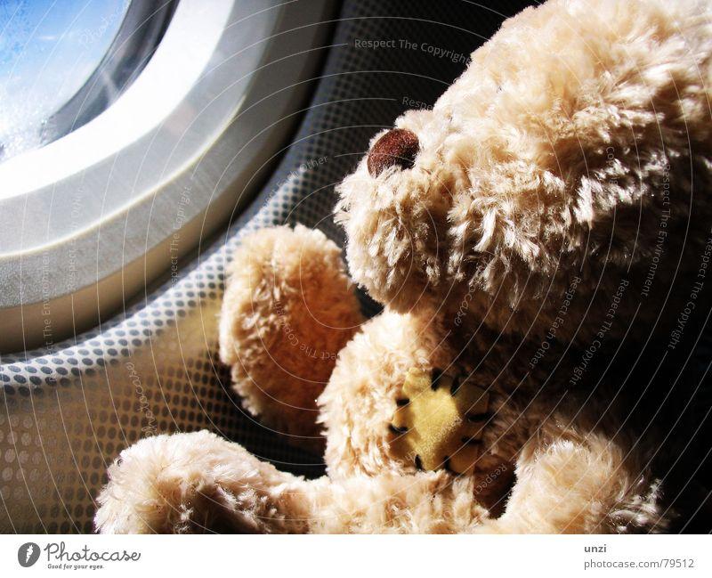 Watch the sky Himmel Sonne Freude Ferien & Urlaub & Reisen Einsamkeit träumen Luft Flugzeug frei Hoffnung Sehnsucht Kindheit Ereignisse Fernweh Teddybär