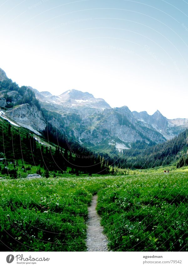 Spider Meadow Berge u. Gebirge Washington DC Glacier Nationalpark