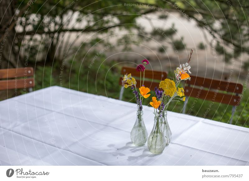 blumige einladung. Natur Pflanze Blume Innenarchitektur Gras Blüte Stil Holz Feste & Feiern Garten Lifestyle Park Wachstum Häusliches Leben