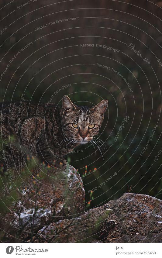 beobachter Katze Natur Pflanze Blume Tier dunkel natürlich sitzen Sträucher ästhetisch beobachten Neugier Wachsamkeit Haustier Interesse Grünpflanze