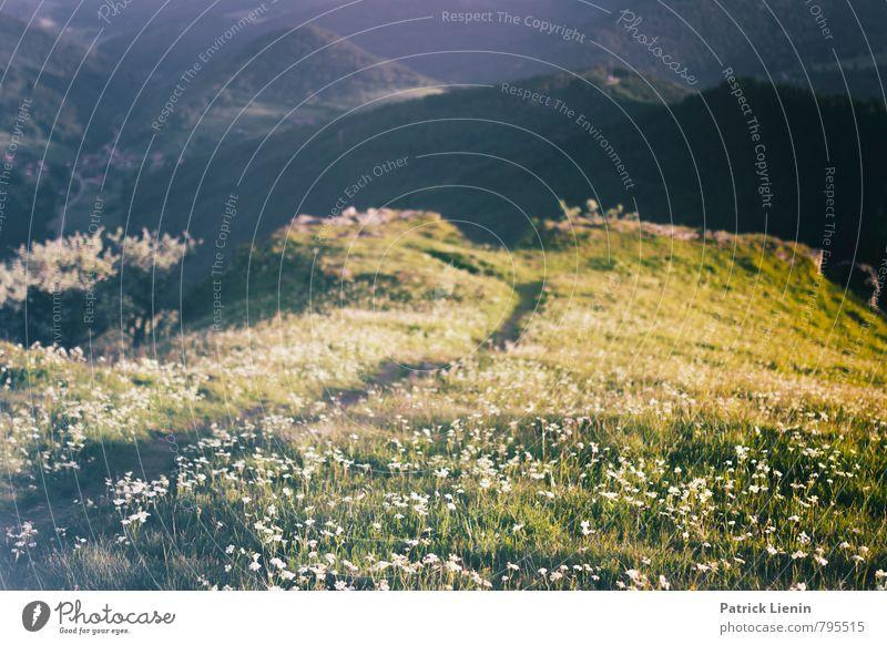 Schwarzwälder Wiesen Natur Ferien & Urlaub & Reisen Pflanze Sommer Erholung Landschaft ruhig Ferne Berge u. Gebirge Umwelt Frühling Gras Freiheit Zufriedenheit