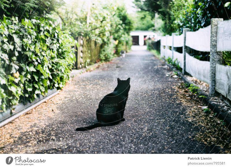 Der Weg ist das Ziel Katze Natur Einsamkeit Erholung Tier Ferne Leben Bewegung Wege & Pfade Garten Stimmung Zufriedenheit ästhetisch Beginn Vergänglichkeit