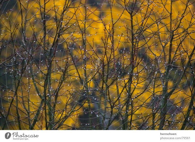 Hoffnung Herbst Sträucher Blatt Wassertropfen Trauer Herbstbeginn Baum Seil Regen Tau Traurigkeit Natur hope