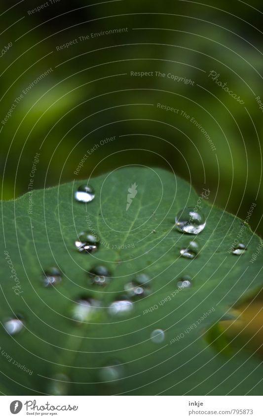 dröppel Natur Wassertropfen Frühling Sommer Blatt Grünpflanze Garten Park liegen einfach glänzend nass natürlich rund grün weiß Oberflächenspannung hydrophob