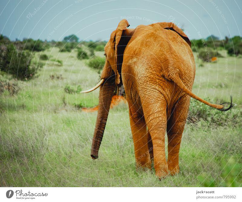 Alles um den Elefantenarsch Farbe Einsamkeit Tier Ferne Wärme Leben Bewegung Gras natürlich Freiheit Gesundheit dreckig Zufriedenheit Wildtier frei stehen