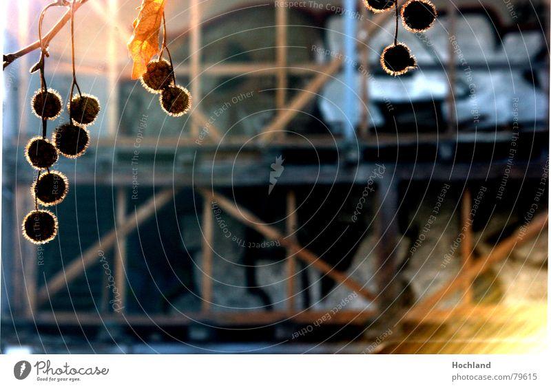 Kugeln vor Ruine Regensburg Baum Baustelle Demontage Holz Romantik Trauer Beton Morgen Architektur baugrube bürgerentscheid nachkriegsbau donaumarkt