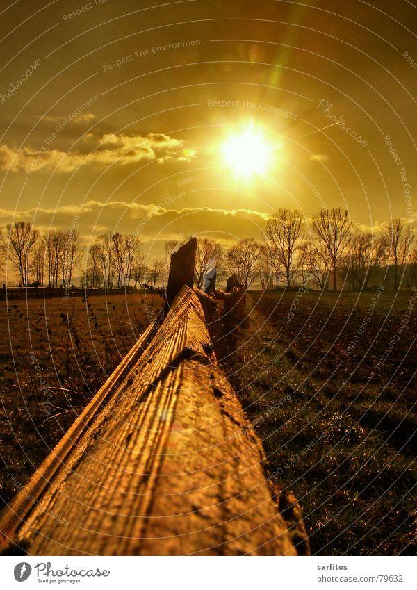 Goldene Zeiten ..... Natur Himmel Sonne Winter ruhig Erholung Herbst Wiese Gras Wetter Umwelt gold Spaziergang Weide Zaun