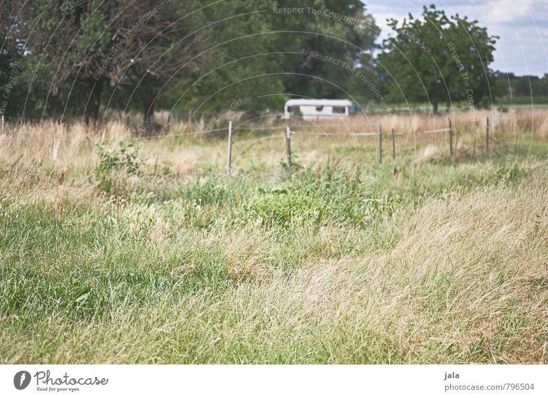 wohnwagen Umwelt Natur Landschaft Pflanze Himmel Sommer Schönes Wetter Baum Gras Sträucher Grünpflanze Wildpflanze Feld Zaun Wohnwagen Freundlichkeit natürlich