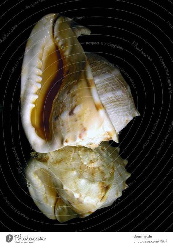 ... und das Meer rauscht weiter... Spiegel Muschel