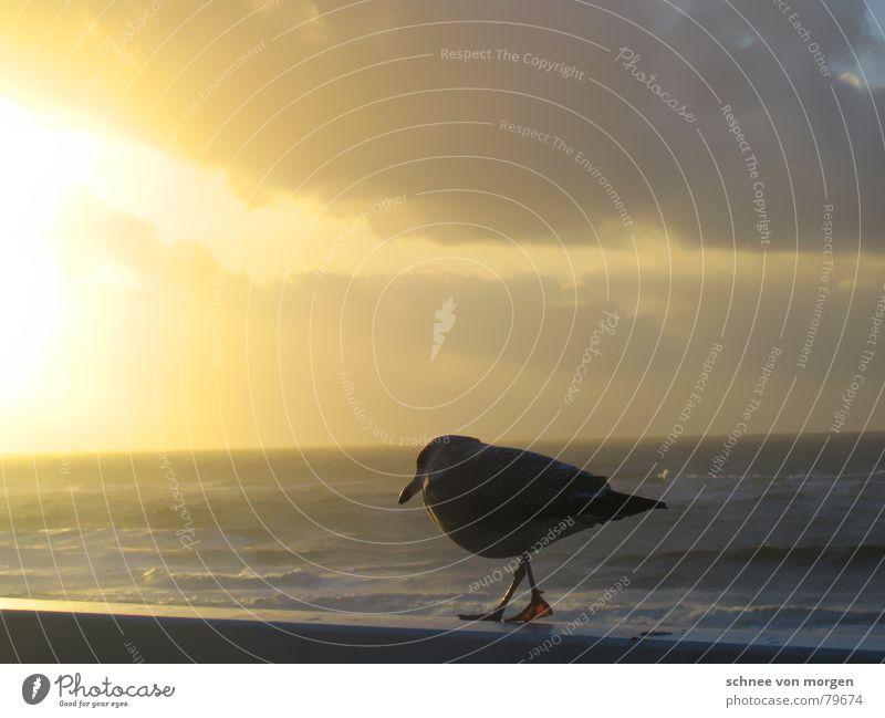 in gedanken Horizont See abgestimmt Möwe Sonnenuntergang Wolken gelb gehen Holz Steg Schnabel ruhig Meditation dunkel Meer Sylt Sommer grell Licht Spaziergang
